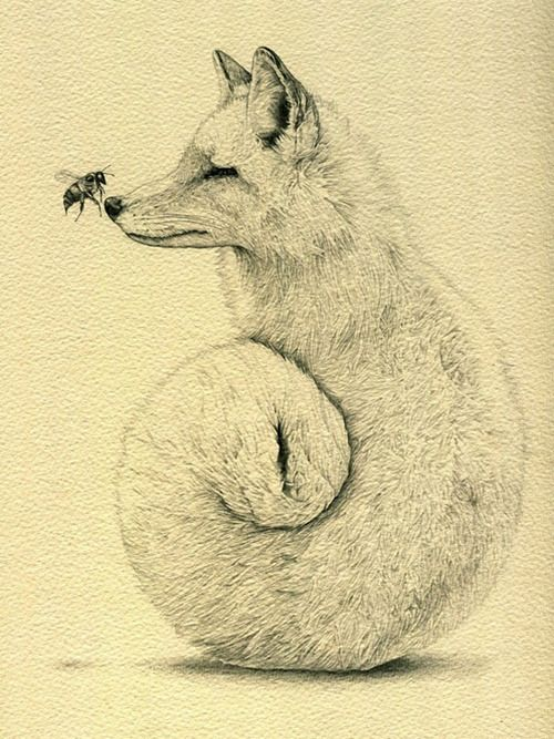 Amy DoverTattoo Ideas, Bees, Inspiration, Illustration, Art, Pencil Drawing, Amy Dover, Foxy, Foxes