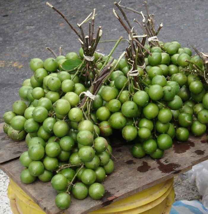 Mamones | Fruit Trees, Fruits from around the world ...