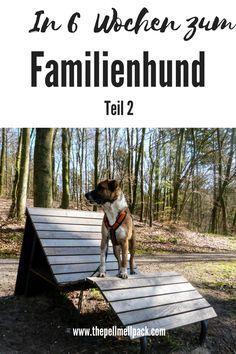 In nur 6 Wochen vom Rüpel zum perfekten Familienhund - ob das geht? Hier kommt der zweite Teil mit unseren Erfahrungen der Wochen drei und vier   Hundetrainig  positive Verstärkung   Free Shaping   thepellmellpack.com