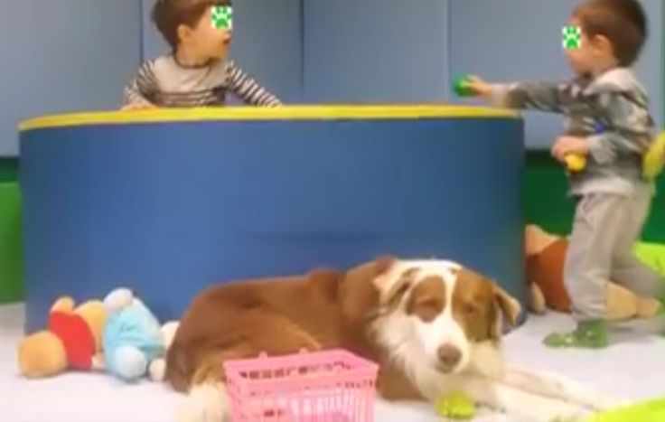 Il cane va all'asilo nido: è il progetto Happy Therapy di Casa Vaikuntha :http://www.qualazampa.news/2016/11/29/il-cane-va-allasilo-nido-e-il-progetto-happy-therapy-di-casa-vaikuntha/