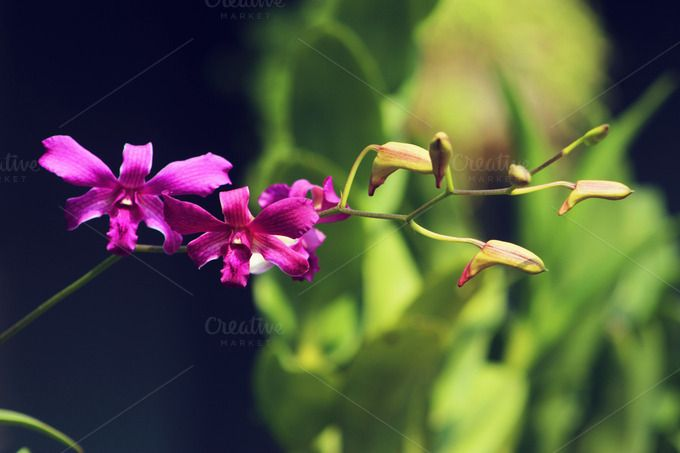 Check out Orchid by GiantDesign Shop on Creative Market #orchid #flower #nature #homegardening #flora #makro #zoom
