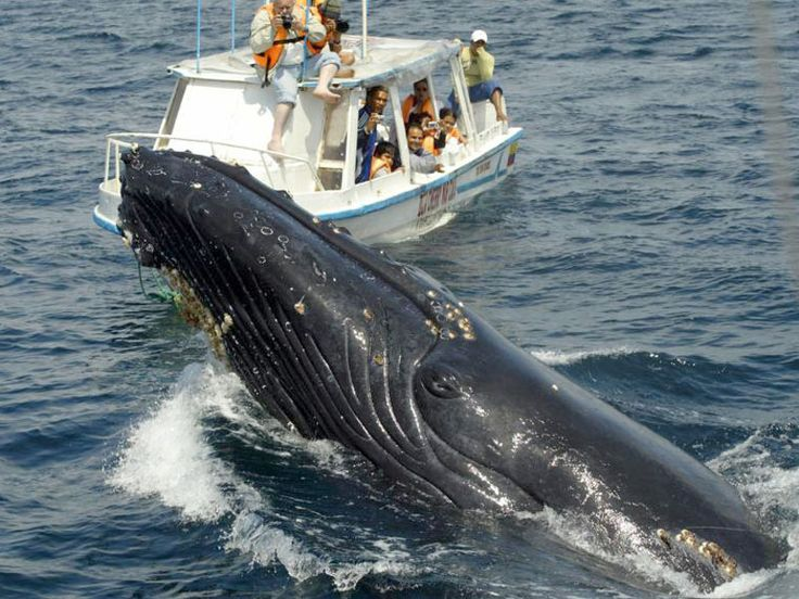 Whale Watching Samana Peninsula | Punta Cana Tours and Excursions