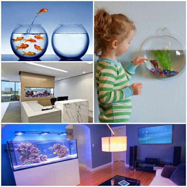 kleines aquarium aquarium einrichtung aquarium tipps