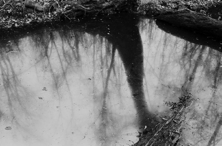 15. Sandy Creek (1998)