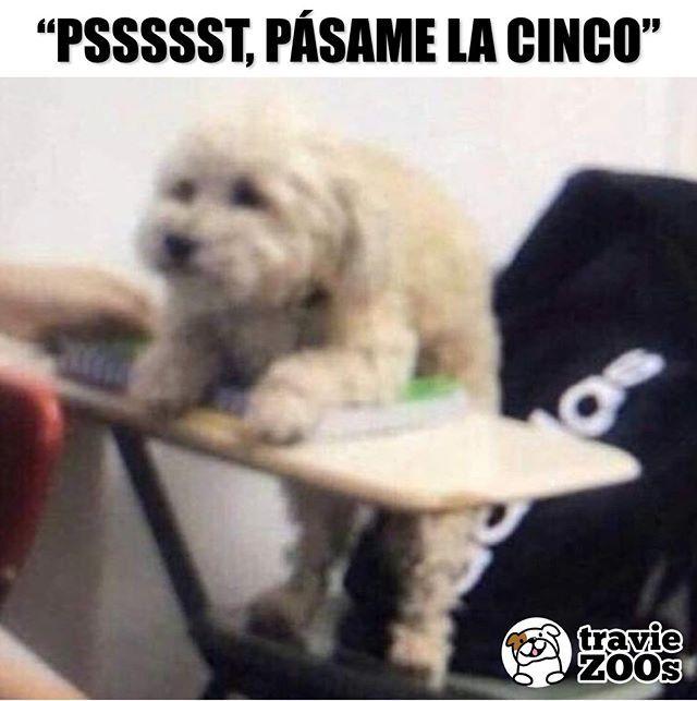 Ay Firulais Hubieras Estudiado Perro Dogs Animales Examen Escuela Memes De La Escuela Memes Divertidos Memes De Animales