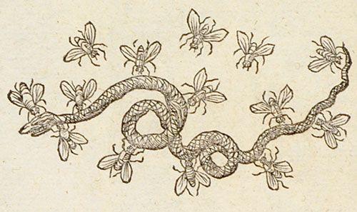 Pictura of Paradin, Claude: Devises heroïques (1557): Transfundit pasta venenum.