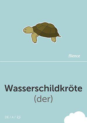 Wasserschildkröte #CardFly #flience #animals #german #education #flashcard #language