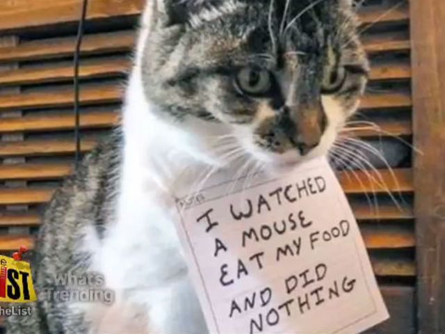 Animal shaming | Cat Shaming Is The New Dog Shaming (PHOTO)
