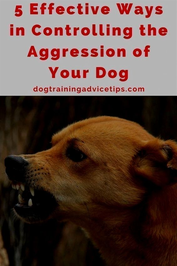 Do You Find It Difficult To Go On A Walk With Your Dog Or Have