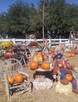 McKee Ranch Foundation Pumpkin Patch