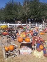 McKee Ranch Foundation Pumpkin Patch