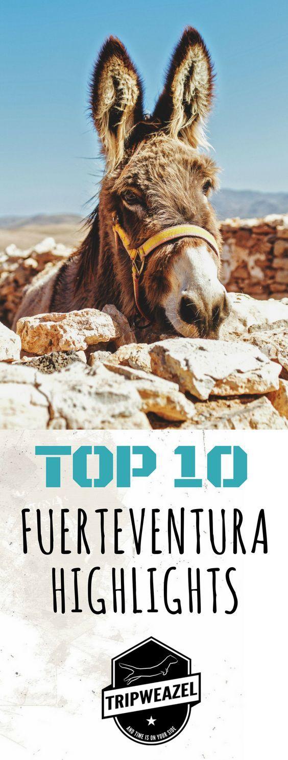 Entdecke die besten Fuerteventura Highlights! Von Vulkanen, Schildkröten und den Dünen Corralejos bis zum legendären Strand von Cofete. #fuerteventura #kanaren #urlaub #reisen #travel #travelblogger