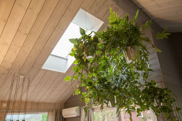 Hanging jungle to strengthen innate connection with nature - Using Biophilic Design principles - Interior design work by Oliver Heath Design for TV2's Tid for Hjem in Norway  Photograph by Jan Inge Mevold Skogheim