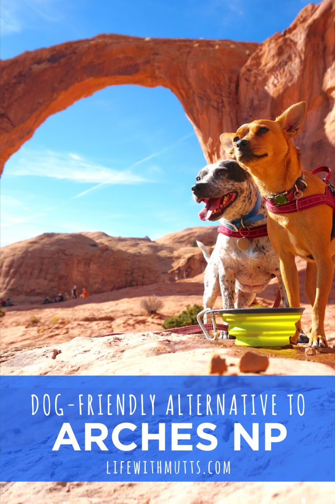 Is Arches National Park dog-friendly? No, no it is really not. BUT, we have another amazing dog-friendly hike for you. Skip Arches and check out Corona Arch! #doginformation