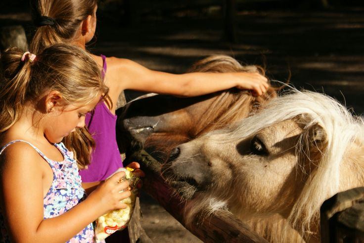 Ponies feeded by kids