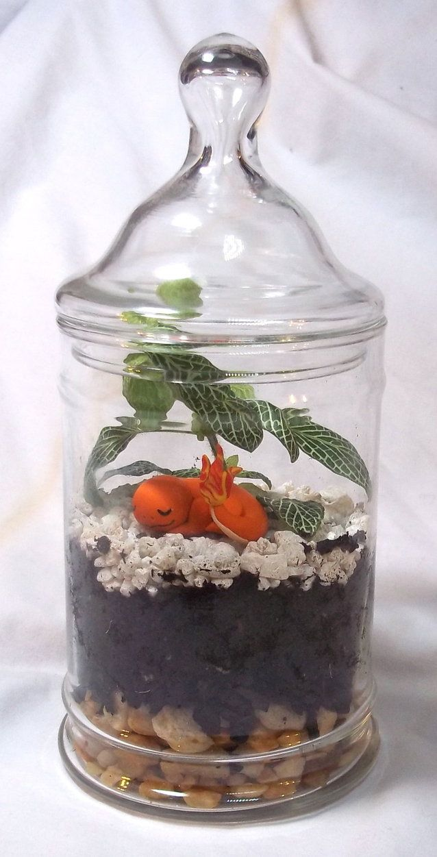More terrariums! The terrarium environment is made by layering rocks at the bottom for drainage, then a layer of activated charcoal to maintain air quality, soil, and rocks. This terrarium contains...