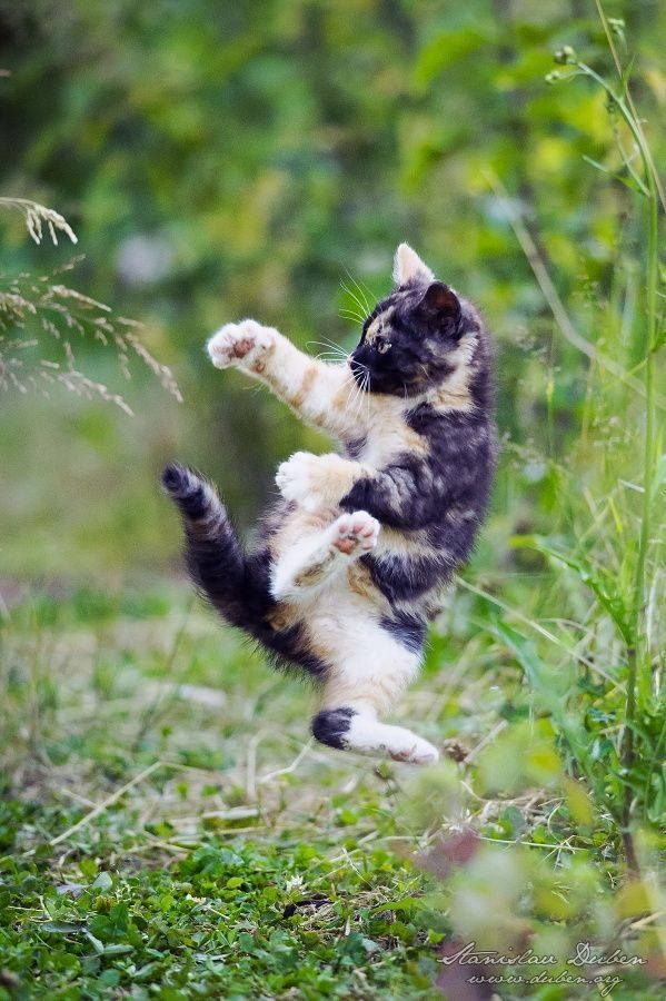 Your kung fu kitten :D