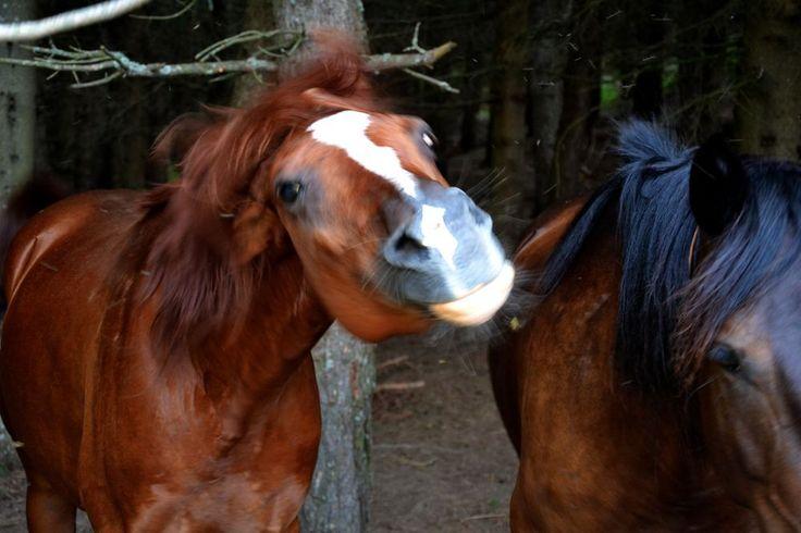 VENTASSO HORSES Photo by Davide Oldani — National Geographic Your Shot