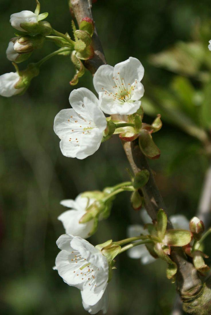 best takken images on pinterest easter floral arrangements and