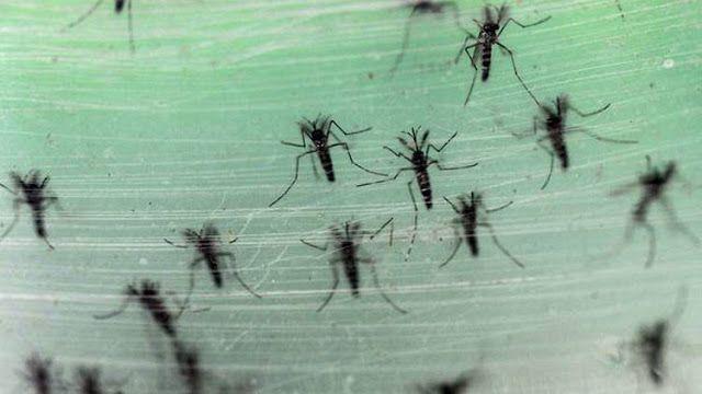 """Nueva tecnología genética se asemeja a """"una reacción nuclear en cadena""""   Especialistas estudiarán un nuevo método destinado a modificar los organismos y acelerar la transmisión de genes transgénicos dentro de las poblaciones de especies de reproducción rápida como los mosquitos y que tiene el potencial de prevenir la propagación de enfermedades y plagas de cultivos. Algunos científicos creen que el uso de esta tecnología por el contrario puede traer consecuencias negativas.  La Academia…"""