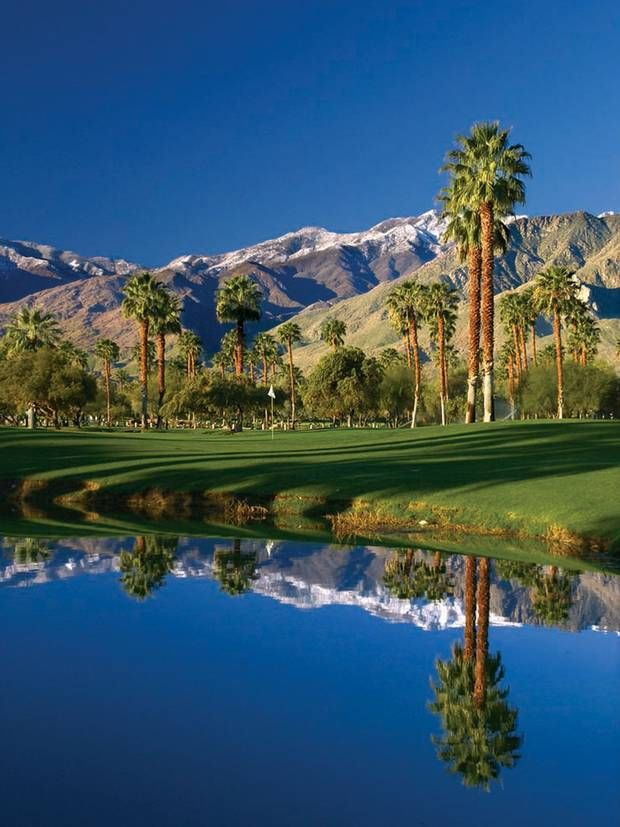 California contrast - palm trees on a golf course in Palm Springs, California, with snow on the mountains in the background!