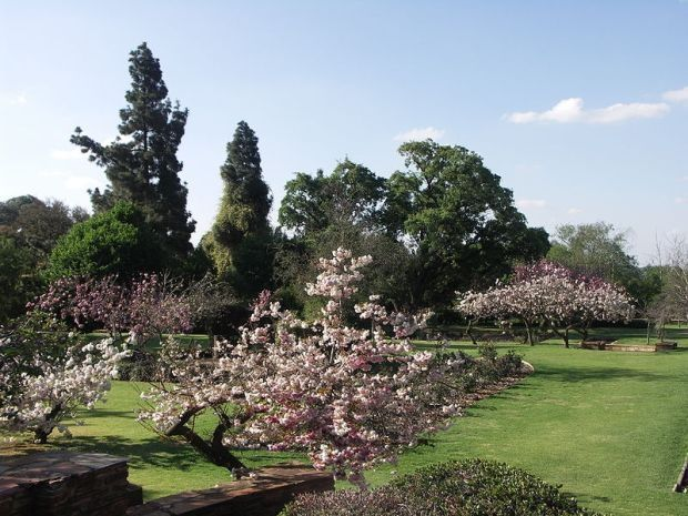 Enjoying the Rose Garden at Johannesburg Botanical Gardens with a lovely picnic and a good novel.