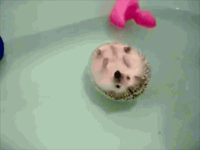 A contemplative hedgehog. | 33 Animal GIFs That Are Guaranteed To Make You Laugh