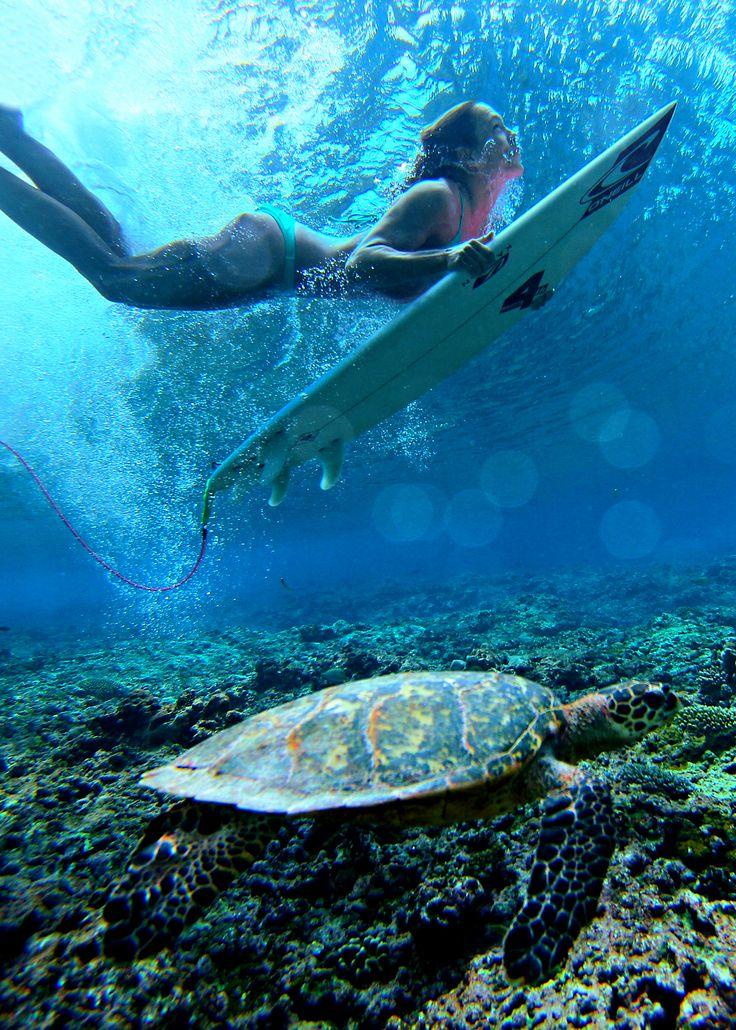 Girl On Surfboard Wallpaper Duck Dive Surf Girl Reef Sea Turtle