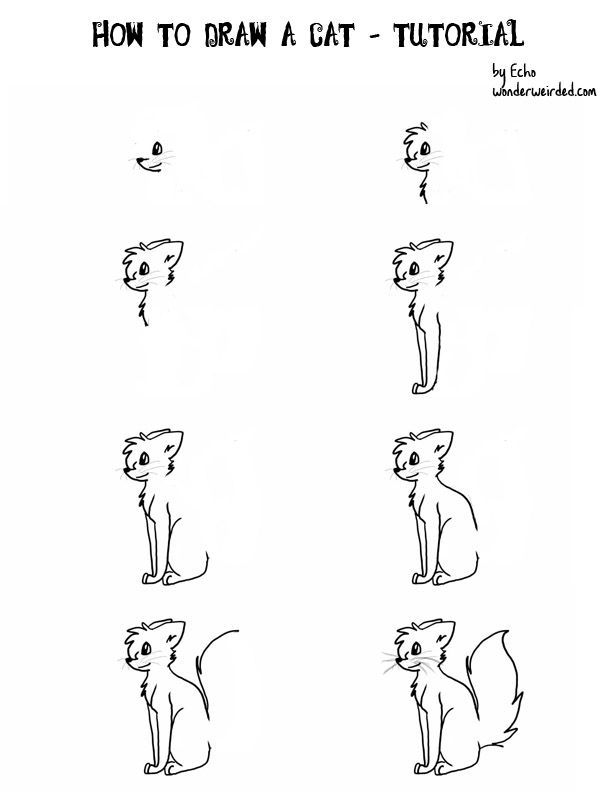 How to draw a cartoon cat at www wonderweirded creatures com how