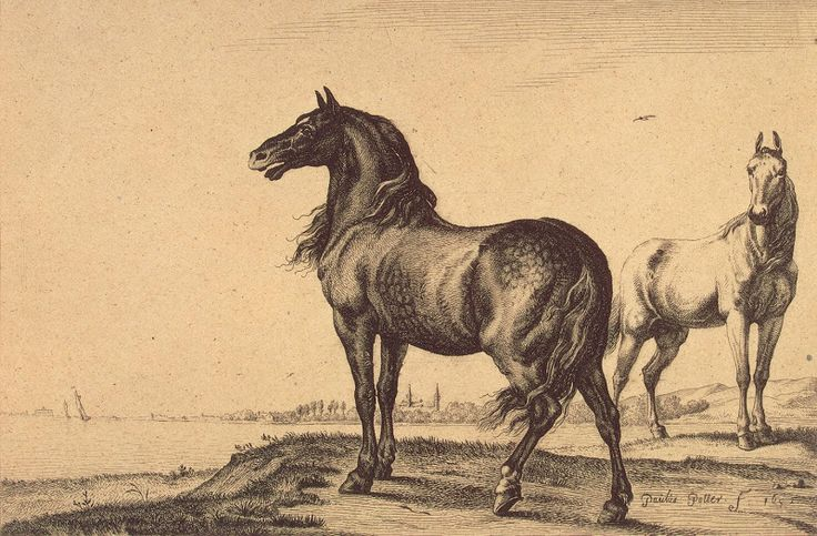 Animal Paintingss | Two Horses - Paulus Potter