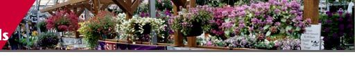 Timeline for producing Northwest cut flowers, herbaceous perennials and shrubs
