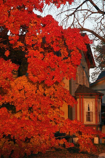 Victorian Red - by uBookwormFarms House, Victorian House, Fall Leaves, Autumn Leaves, Autumn Home, Autumn Fall, Favorite Seasons, Fall Autumn, Autumn Colors
