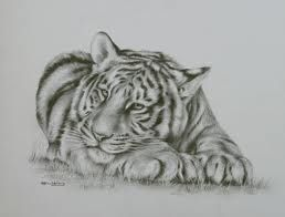tiger sketches pencil - Google Search