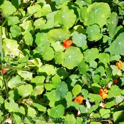 Von Tag zu Tag - Maries Blog: Frischer Salat im November