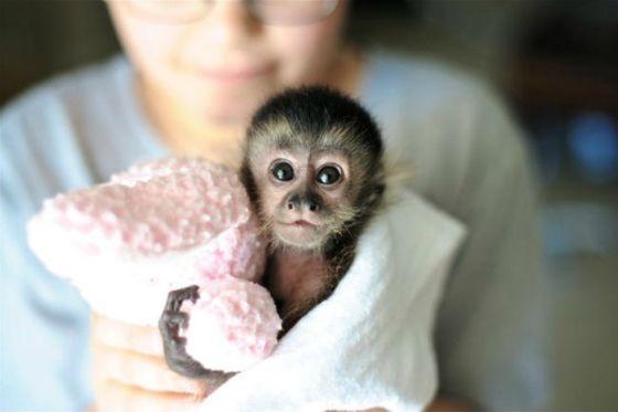 OMG, I want myself a baby monkey!