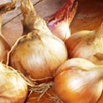 Stamme Selection Gold Onion - Seed Savers