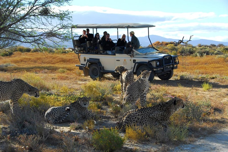 A 3 hours safari drive in a 10 000 hectares reserve.