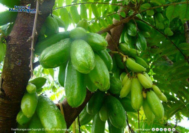 Mimbro Comida Nicarag 252 Ense Frutas Y Antojos Pinterest