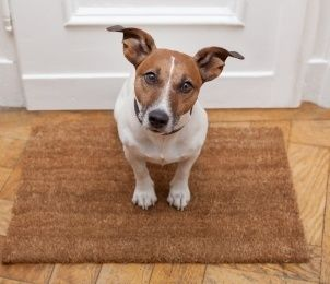 There are things pet owners should know and understand about their homeowners insurance policy as it relates to their pets.