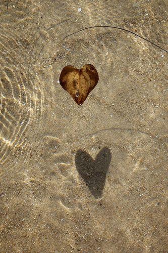Heart Shaped Leaf Shadow by Ojo Espejo