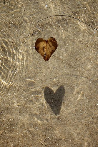 Heart Shaped Leaf Shadow by Ojo Espejo
