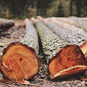 #felled #cut #forest #instanaturelover #vscopoland #igerspoland #visitpoland  #ourpoland #nikon #nikontop #nikon_photography_ #poland #las #polska #lubiepolske #naturelovers #nature_perfection #naturaleza #igerslublin #akademianikona @nikon_pl #instapolan