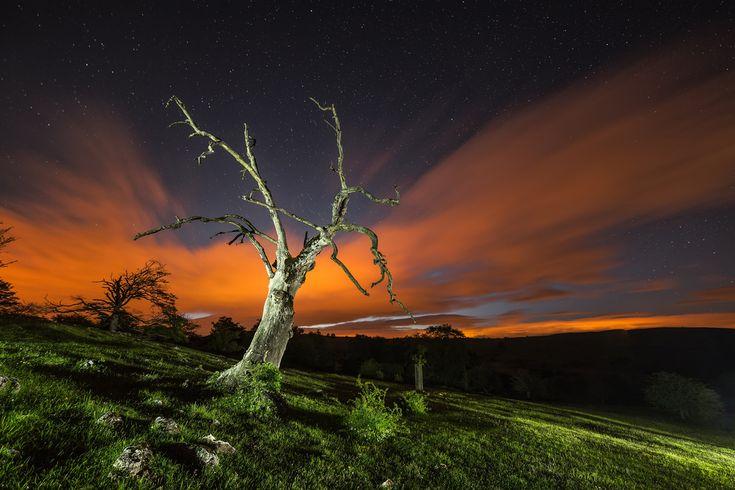 The Hanging Tree - Alfredo -  El arbol del ahorcado | Escapada nocturna, en principio a fotografiar estrellas, y al final nos quedamos con este arbol seco.