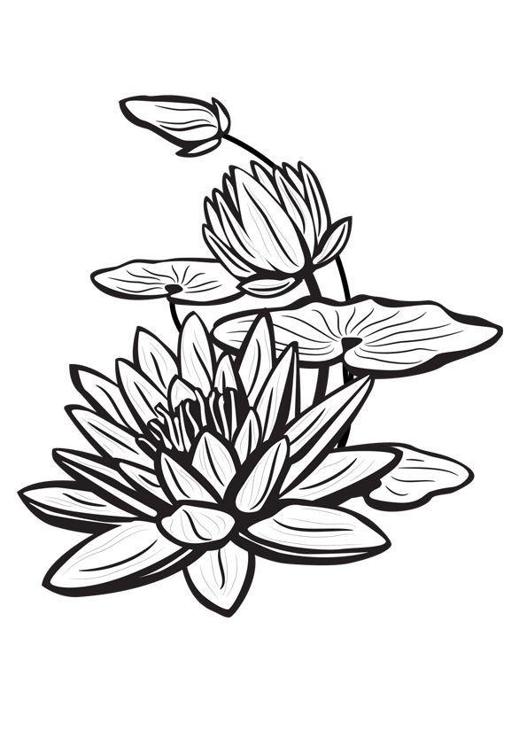 Pin Oleh Alto Di Quilling Bunga Teratai Lukisan Bunga Sketsa Seni
