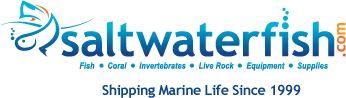 Reef safe on-line fish   Saltwaterfish.com