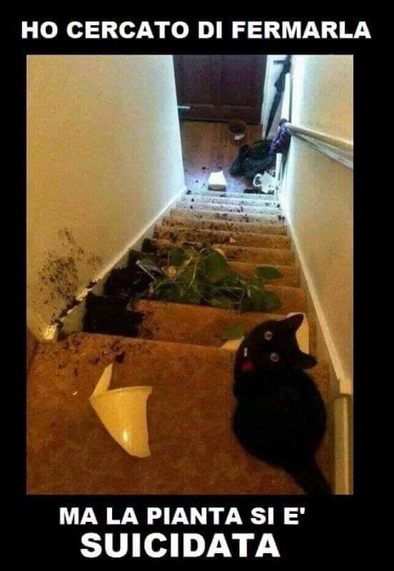 """non smetto di ridere visto che è tanto divertente haaaaa (dimenticavo secondo me e stato il gatto a """"ucciderla"""")"""