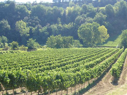 Buy Cantina Tollo wines direct online!