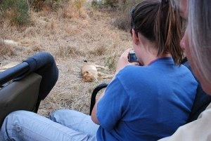 Taking photographs of wild lions at Arathusa Game Reserve