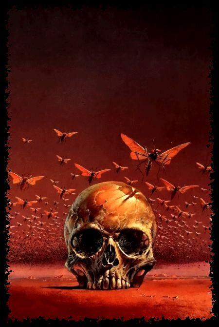Dark Skull Butterfly Image
