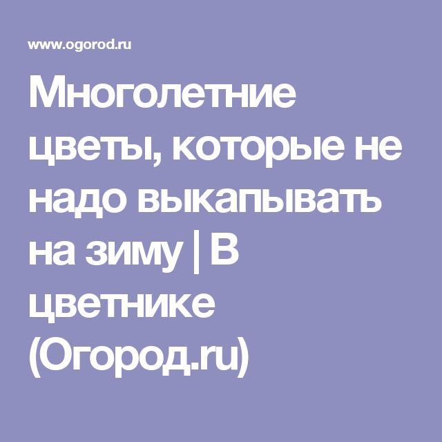Многолетние цветы, которые не надо выкапывать на зиму   В цветнике (Огород.ru)